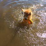 Fabian testar vattenleksaken Zogoflex Air Dash
