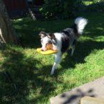 Nelly testar vattenleksaken Zogoflex Air Dash